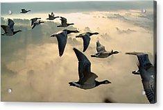 Birds In Flight Acrylic Print by Digital Art Cafe