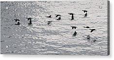 Birds In Flight. Acrylic Print by Robert Rodda