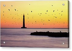 Birds In Flight Acrylic Print