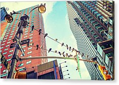 Birds In New York City Acrylic Print