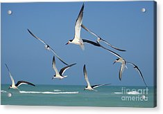 Birds In Paradise Acrylic Print by Jan Daniels