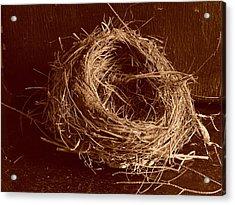Bird's Nest Sepia Acrylic Print