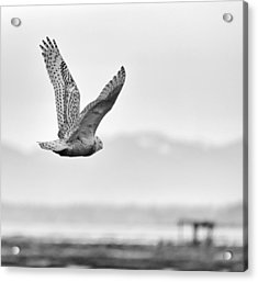 Birds Of Bc - No.16 - Snowy Owl - Bubo Scandiacus Acrylic Print by Paul W Sharpe Aka Wizard of Wonders