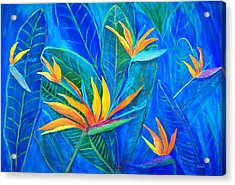 Birds Of Paradise Acrylic Print by Anne Sands