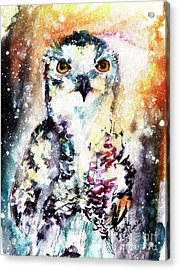Birds Of Prey Snowy Owl Wildlife Art Acrylic Print