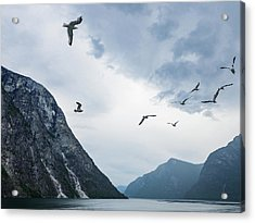 Birds Of The Fjords Of Norway Acrylic Print