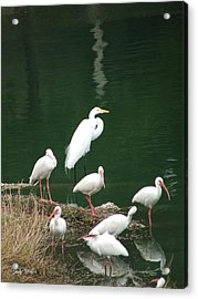 Birds On 17th Street Pond Acrylic Print by Judy  Waller