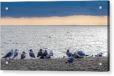 Acrylic Print featuring the photograph Birds On A Beach by Kendall McKernon
