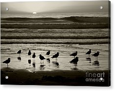 Birds On A Beach Acrylic Print