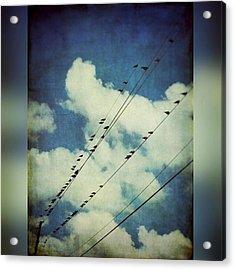 Birds On A Line #clouds #birdsonawire Acrylic Print