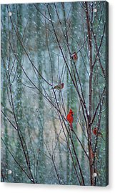 Birds On A Snowy Day Acrylic Print