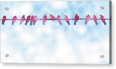 Birds On A Wire 3 Acrylic Print by The Art of Marsha Charlebois