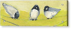 Birds On A Wire Acrylic Print by Jennifer Lommers