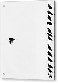 Birds On A Wire Acrylic Print by Jim Wright