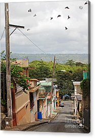 Birds Over Yabucoa Acrylic Print