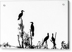 Birds Perched On Branches Acrylic Print