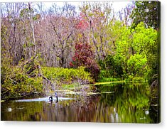 Acrylic Print featuring the photograph Birds Playing In The Pond 3 by Madeline Ellis
