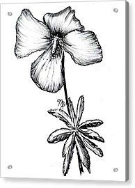 Birdsfoot Violet Acrylic Print