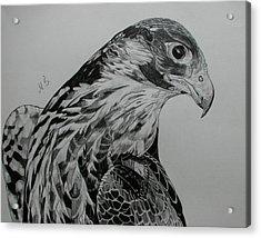 Birdy Acrylic Print by Melita Safran