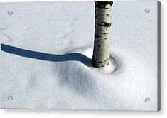 Acrylic Print featuring the photograph Birtch Tree Shadow by Douglas Pike