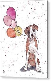 Birthday Boxer Acrylic Print by Katrina Davis