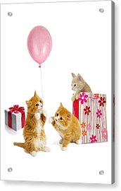 Birthday Kitties Acrylic Print by Bob Nolin