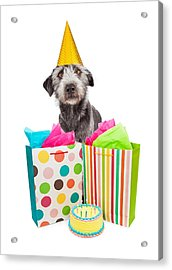 Birthday Party Dog Presents And Cake Acrylic Print by Susan Schmitz