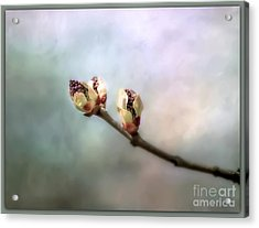 Acrylic Print featuring the photograph Birthing Of A Lilac by Brenda Bostic