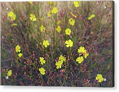 Acrylic Print featuring the photograph Bisbee Peak Rushrose by Alexander Kunz