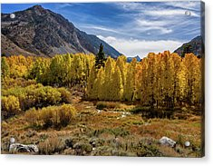 Bishop Creek Aspen Acrylic Print