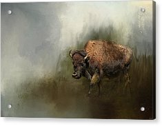Bison After The Mud Bath Acrylic Print by Jai Johnson