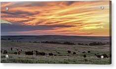 Bison At Sunrise Acrylic Print