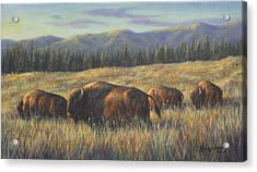 Bison Bliss Acrylic Print