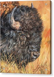 Bison Acrylic Print by David Stribbling