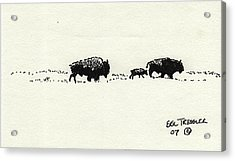 Bison Family Acrylic Print by Eric Tressler