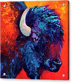 Bison Head Color Study II Acrylic Print by Marion Rose