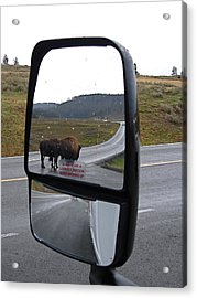 Bison In My Rear View Acrylic Print