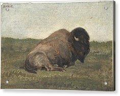 Bison Lying Down Acrylic Print