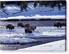 Acrylic Print featuring the photograph Bison On River Strand Landscape by Kae Cheatham
