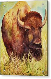 Bison Or Buffalo Acrylic Print by Patricia Pushaw