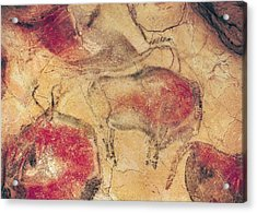 Bisons From The Caves At Altamira Acrylic Print by Prehistoric
