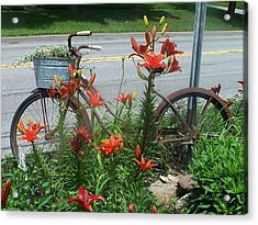 Biycle Flowers Acrylic Print by Charlotte Gray