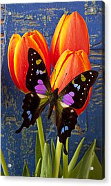 Black And Pink Butterfly Acrylic Print by Garry Gay