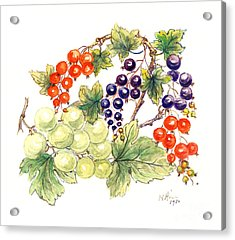 Black And Red Currants With Green Grapes Acrylic Print by Nell Hill