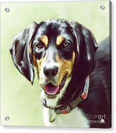 Acrylic Print featuring the digital art Black And Tan by Lois Bryan