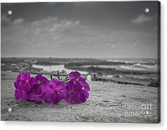 Black And White And Purple Acrylic Print by Lisa Plymell