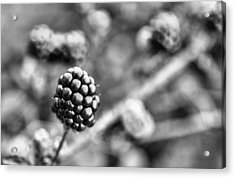 Black And White Blackberry Acrylic Print by JC Findley