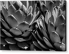 Black And White California Cabbage Cactus Agave Acrylic Print by Randall Nyhof