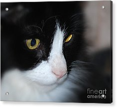 Acrylic Print featuring the photograph Black And White Cat by Lila Fisher-Wenzel