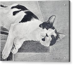 Black And White Cat Lounging Acrylic Print by Phyllis Tarlow